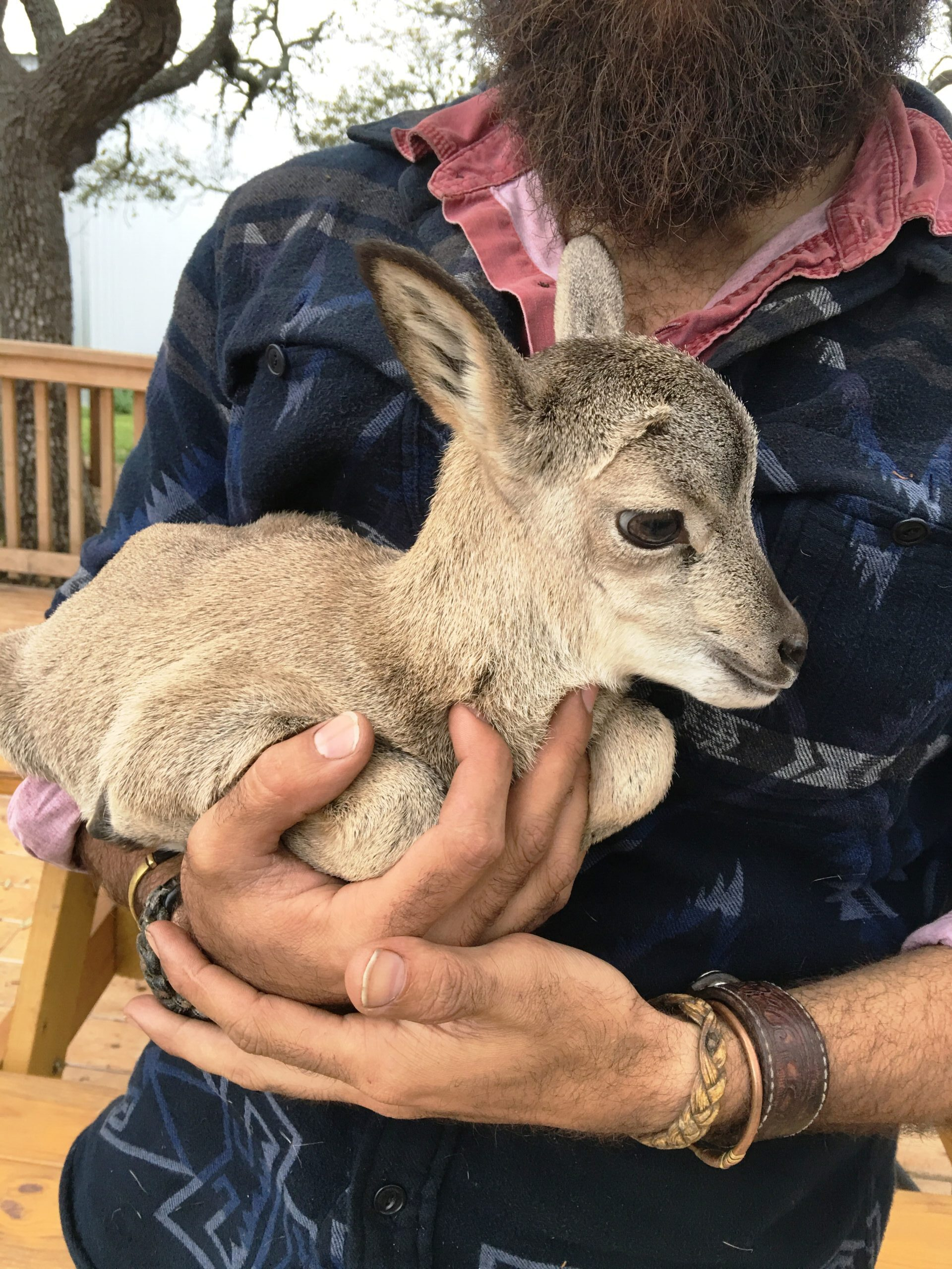 Travis with Baby Urial